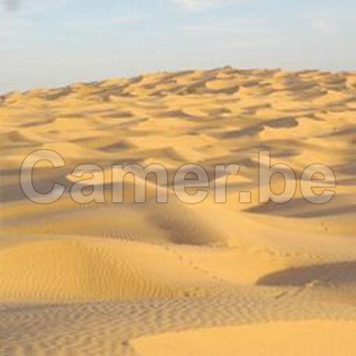 CAMEROUN :: Immigration : Le rescap� du Sahara :: CAMEROON