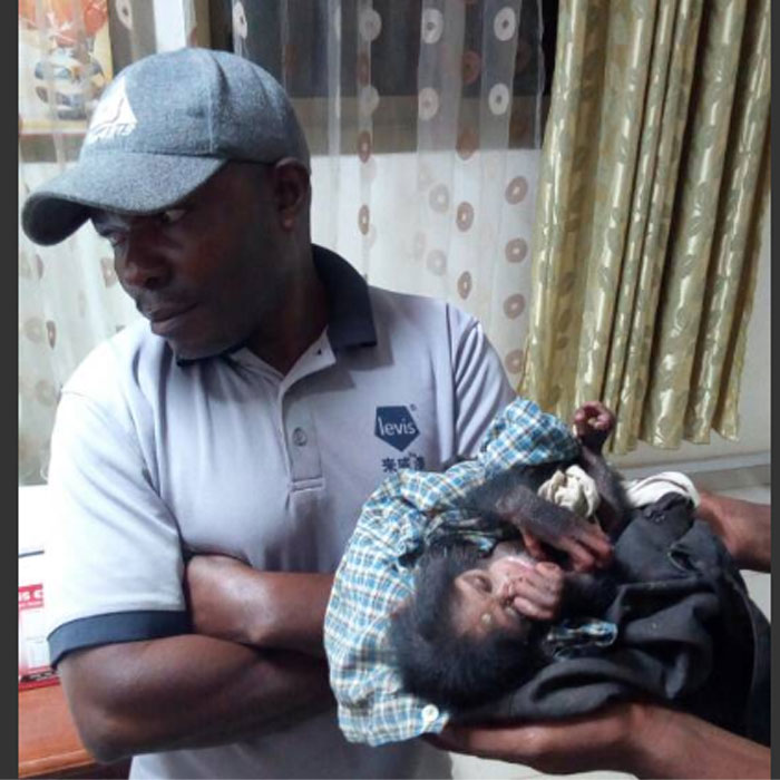 CAMEROUN :: Cameroon: Baby chimp rescued, trafficker arrested.