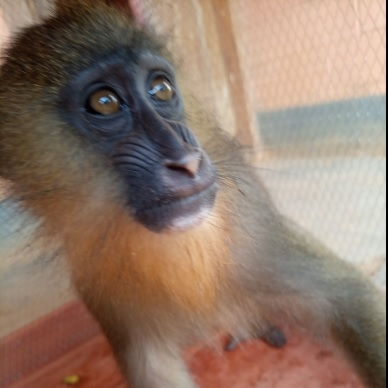 A woman to appear in court for mandrill trafficking