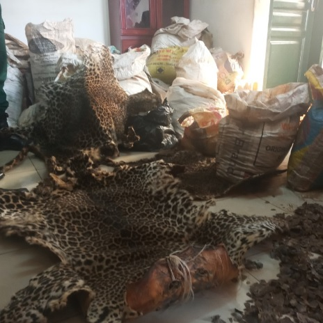 A man arrested with 331 kg Pangolin Scales