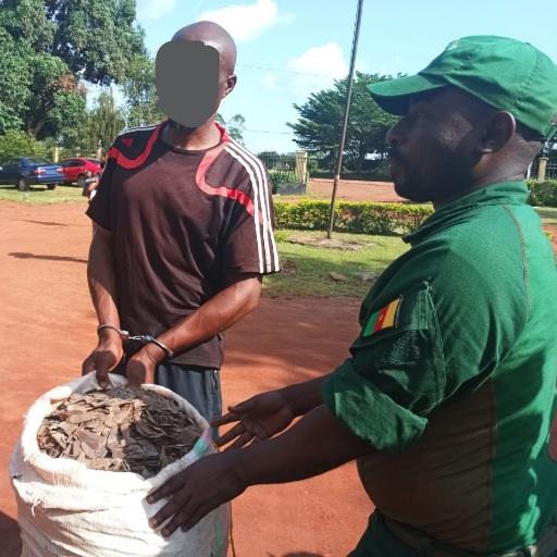Un homme interpellé avec 60 kg d'écailles de pangolin