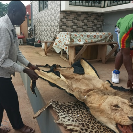 Two wildlife traffickers to appear in court