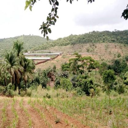 Njinbouot-Fongué : verger et wallons, sources du métissage culturel sur la rive gauche du Noun
